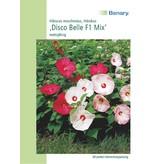 Benary Hibiscus Disco Belle F1 Mix, mehrjährig