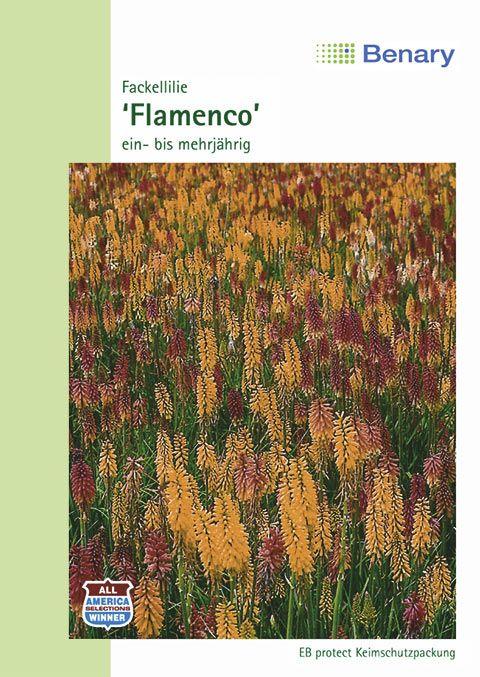 Benary Fackellilie Flamenco, ein- und mehrjährig
