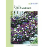 Benary Edelwicke Little Sweetheart Mix, einjährig