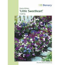 Benary Edelwicke Little Sweetheart Mix, einjährig