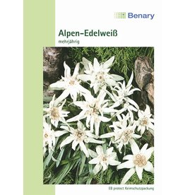 Benary Alpen-Edelweiß Mehrjährig