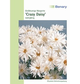 Benary Margerite Crazy Daisy, mehrjährig