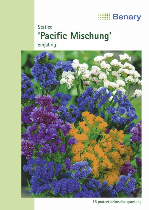 Benary Statice  Pacific Mischung, einjährig