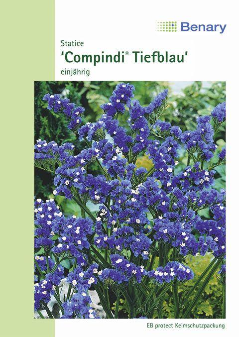 Benary Statice  Compindi® Tiefblau, einjährig