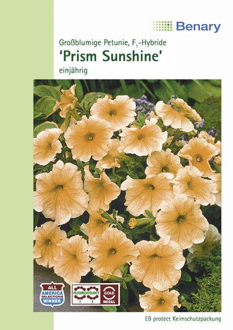 Benary Petunie Prism F1 Sunshine, einjährig