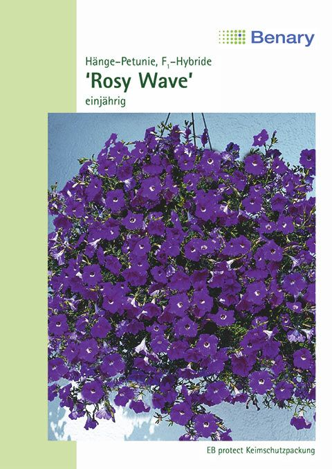 Benary Petunie WonderWave® F1 Rosy, einjährig