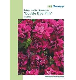 Benary Petunie Double Duo Pink, einjährig