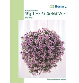 Benary Petunie Big Time F1 Orchid Vein, einjährig