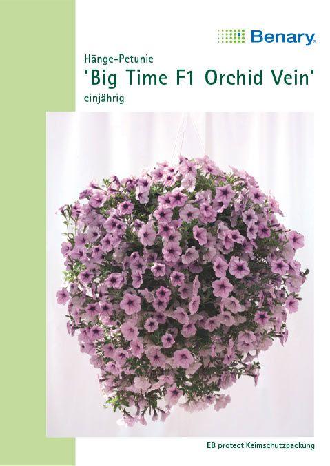 Benary Petunie Big Time F1 Orchid Vein, einjährig