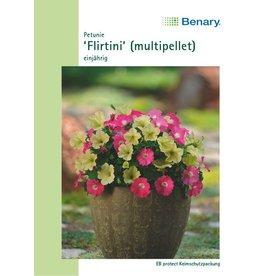 Benary Petunie Flirtini (multi-pellet), einjährig