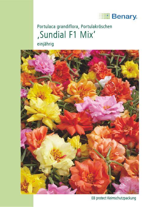 Benary Portulakröschen Sundial F1 Mix, einjährig