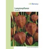 Benary Lampionpflanze Mehrjährig