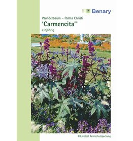 Benary Wunderbaum Carmencita® Rot, einjährig