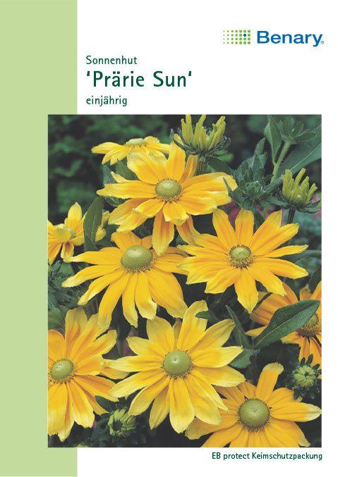 Benary Sonnenhut Prairie Sun, einjährig