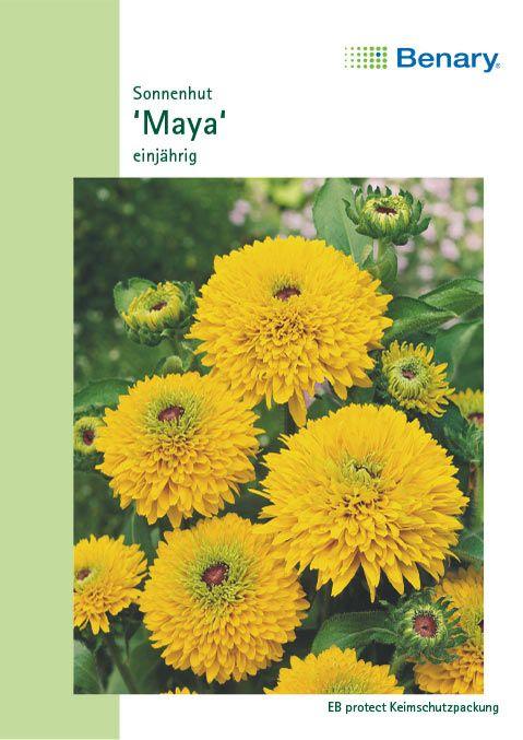 Benary Sonnenhut Maya, einjährig