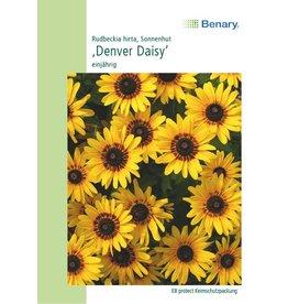 Benary Sonnenhut Denver Daisy, einjährig