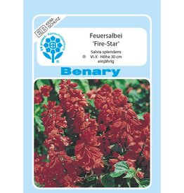 Benary Feuersalbei Fire-Star®, einjährig