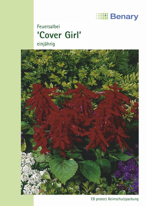 Benary Feuersalbei Cover Girl®, einjährig