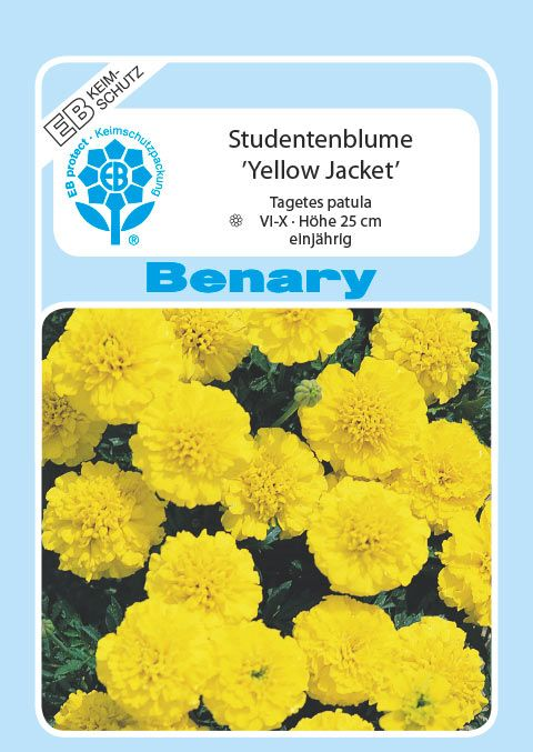 Benary Studentenblume Yellow Jacket, einjährig