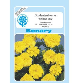 Benary Studentenblume Yellow Boy, einjährig
