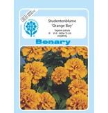 Benary Studentenblume Orange Boy, einjährig
