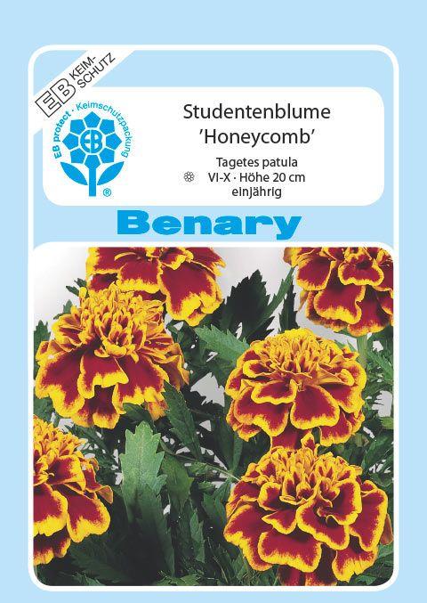 Benary Studentenblume Honeycomb, einjährig