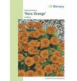 Benary Studentenblume Hero Orange, einjährig