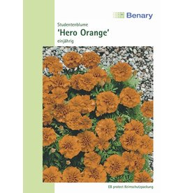 Benary Studentenblume Hero Orange, einjährig