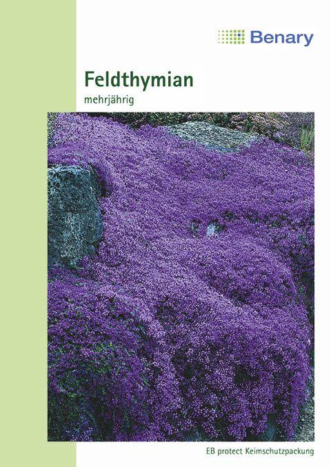 Benary Feldthymian Mehrjährig
