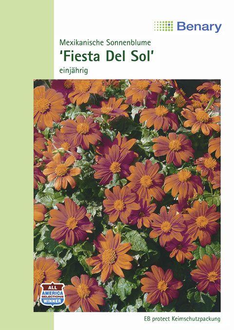 Benary Mexikanische Sonnenblume Fiesta Del Sol, einjährig
