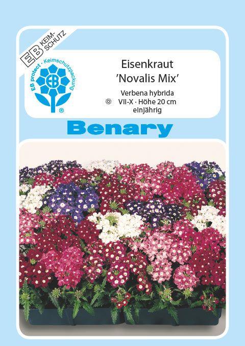 Benary Eisenkraut Novalis® Mix, einjährig