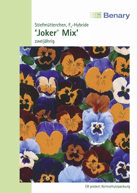 Benary Stiefmütterchen Joker® Mix, zweijährig