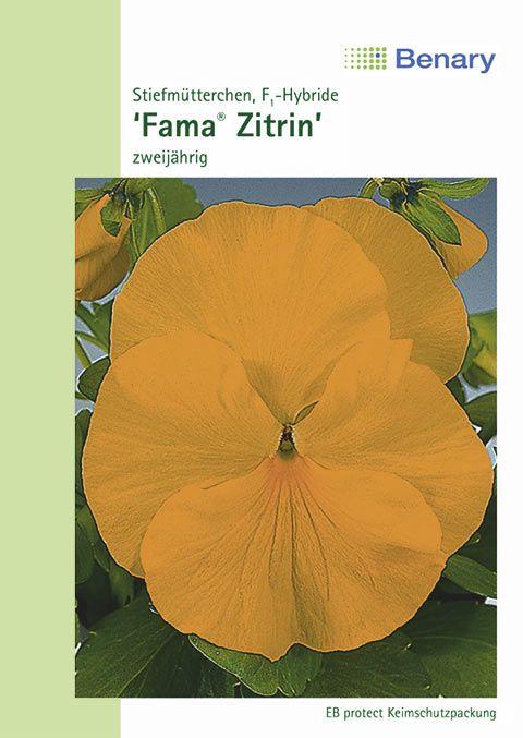 Benary Stiefmütterchen Fama® Zitrin, zweijährig