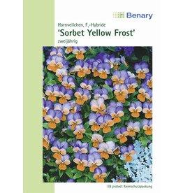 Benary Hornveilchen Sorbet F1 Yellow Frost, zweijährig