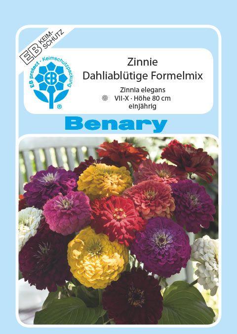 Benary Zinnie Dahliablütige Formelmix, ,einjährig