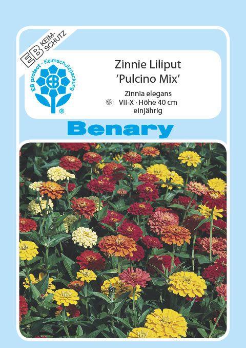 Benary Zinnie Pulcino Mix, einjährig