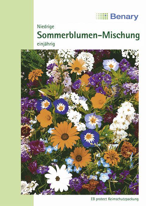Benary Blumenmischung Niedrige Sommerblumen-Mischung, einjährig