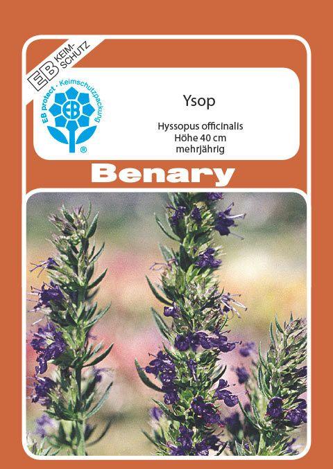 Benary Ysop