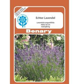 Benary Lavendel Echter