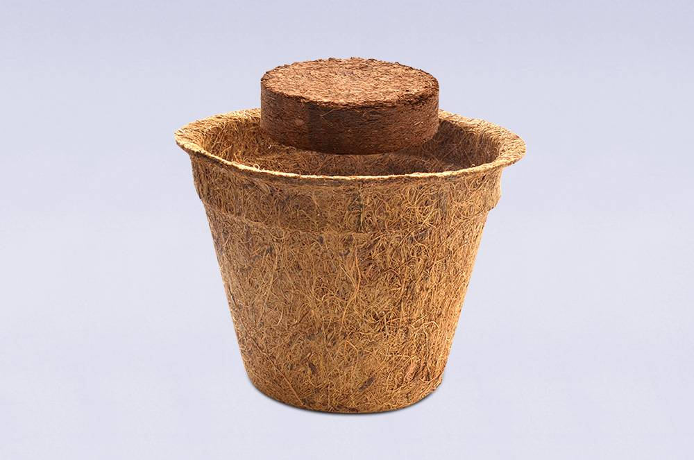 meinwoody Anzuchtset - BIO Bohnenkraut