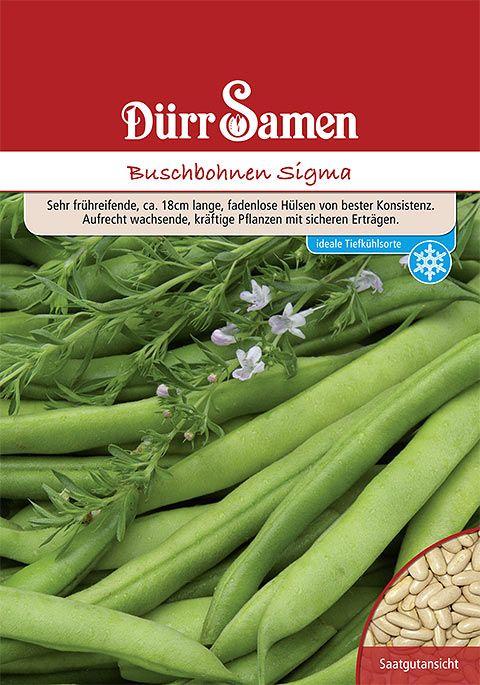 Dürr Samen Buschbohnen  Sigma (Vorteilspackung)