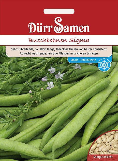 Dürr Samen Buschbohnen  Sigma