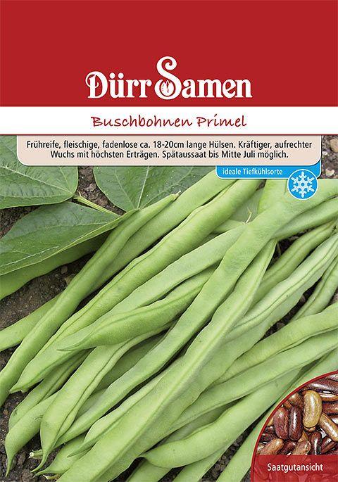 Dürr Samen Buschbohnen  Primel (Vorteilspackung)