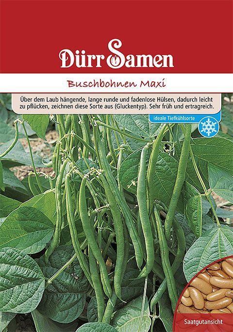 Dürr Samen Buschbohnen   Maxi (Vorteilspackung)