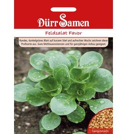 Dürr Samen Feldsalat Favor