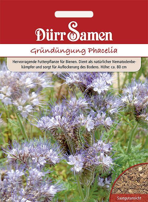 Dürr Samen Gründüngung Phacelia/Bienenfreund 40 g