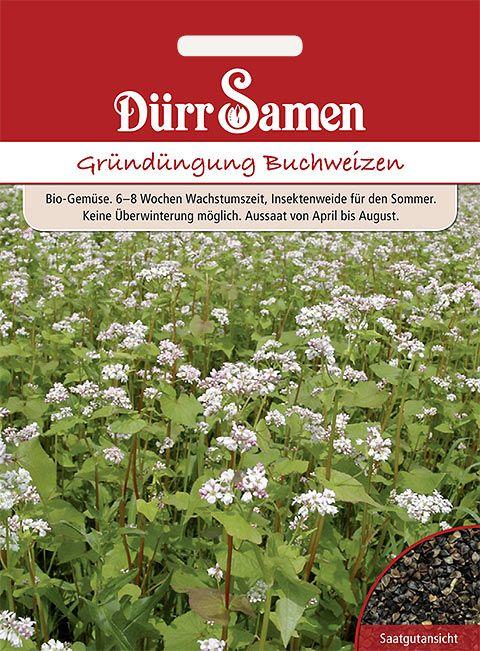 Dürr Samen Gründüngung  Buchweizen