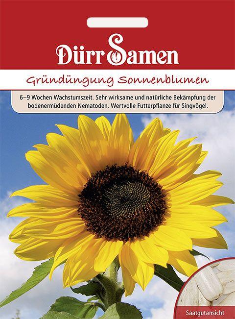 Dürr Samen Gründüngung  Sonnenblumen 50 g