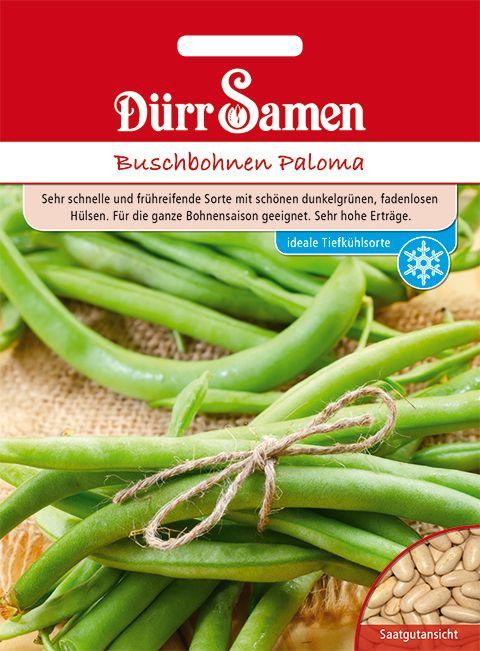 Dürr Samen Buschbohnen  Paloma