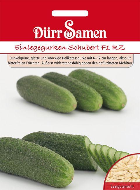 Dürr Samen Einlegegurken  Schubert F1 RZ